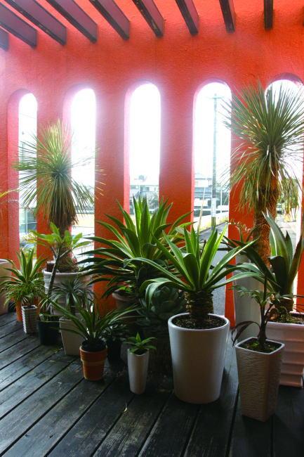 観葉植物がたくさんのテラス/HIRO La mano(ヒロラマーノ)